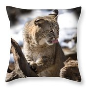 Bobcat Throw Pillow by Jeff Grabert