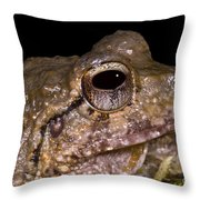 Bobs Robber Frog Throw Pillow