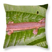 Bolitoglossine Salamander Throw Pillow