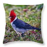 Brazillian Red-capped Cardinal Throw Pillow