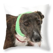 Brindle Lurcher Wearing A Bandage Throw Pillow