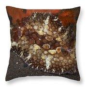Brown And White Discodoris Nudibranch Throw Pillow