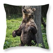 Brown Bear Itch Throw Pillow