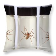 Brown Recluse Spider Throw Pillow