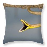 Brown Vine Snake, Oxybelis Aeneus Throw Pillow