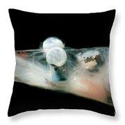 Brownsnout Spookfish Throw Pillow