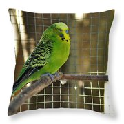 Budgerigar - Parakeet Throw Pillow