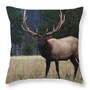 Bull Elk Throw Pillow