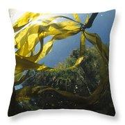 Bull Kelp Underwater Clayoquot Sound Throw Pillow