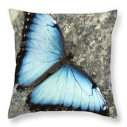 Butterfly, Niagara Botanical Gardens Throw Pillow