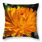 Calendula Named Bon-bon Orange Throw Pillow