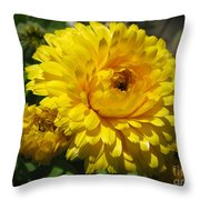 Calendula Named Bon-bon Yellow Throw Pillow
