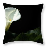 Calla Lily Against Black Throw Pillow