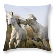 Camargue Horse Equus Caballus Stallions Throw Pillow