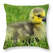 Canada Gosling Throw Pillow