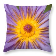 Cape Blue Waterlily Nymphaea Capensis Throw Pillow