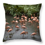 Caribbean Flamingos At The Zoo Throw Pillow