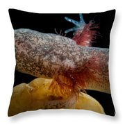 Cascades Caverns Salamander Throw Pillow