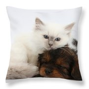 Cavapoo Pup And Blue-point Kitten Throw Pillow