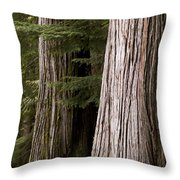 Cedar Trees, Whistler, British Columbia Throw Pillow