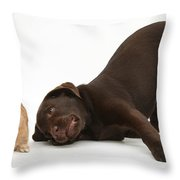 Chocolate Lab & Netherland-cross Rabbit Throw Pillow