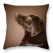 Chocolate Labrador Retriever Portrait Throw Pillow