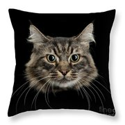 Close Up Of Cats Face Throw Pillow