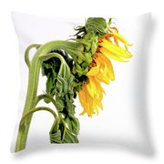 Close Up Of Sunflower. Throw Pillow by Bernard Jaubert