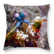 Close-up View Of A Mantis Shrimp, Papua Throw Pillow