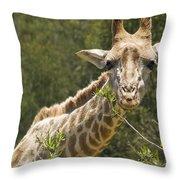 Close View Of A Giraffe Throw Pillow