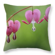 Close View Of Dutchmans Breeches, Or Throw Pillow