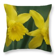 Close View Of Early Spring Daffodils Throw Pillow