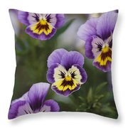 Close View Of Pansy Blossoms Throw Pillow