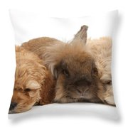 Cockerpoo Puppies And Rabbit Throw Pillow