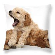 Cockerpoo Puppies Throw Pillow