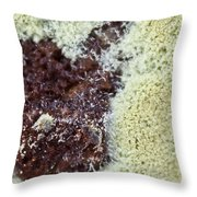 Coffee Grounds 1 Throw Pillow