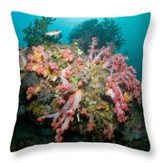 Colorful Reef Scene, Komodo, Indonesia Throw Pillow