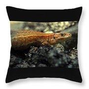 Common Lizard Throw Pillow
