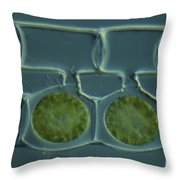 Conjugation In Spirogyra Algae Lm Throw Pillow