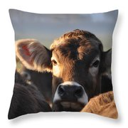 cow Throw Pillow