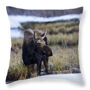 Cow Moose Throw Pillow