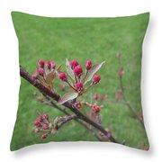 Crab Apple Tree Buds Throw Pillow