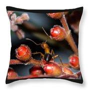 Curious Ant Throw Pillow