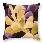 Curvularia Geniculata Throw Pillow