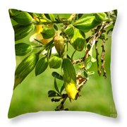 Cusco Peru Street Scenes Throw Pillow