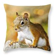 Cute Red Squirrel Closeup Throw Pillow