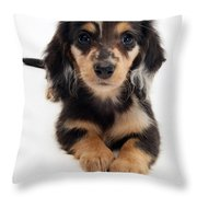 Dachshund Pup Throw Pillow