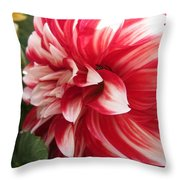 Dahlia Named Myrtle's Brandy Throw Pillow