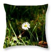 Daisy Daisy Throw Pillow by Isabella F Abbie Shores FRSA