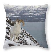 Dall Sheep Ovis Dalli Ram, Yukon Throw Pillow